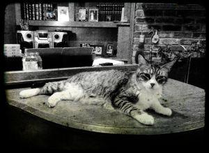 Oscar on the Piano