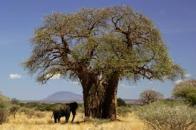 Tanzania Pic