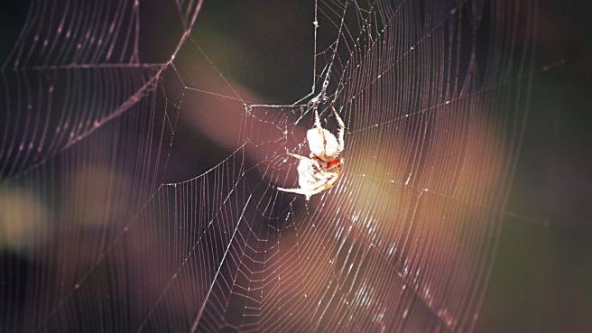 spider-web_edit