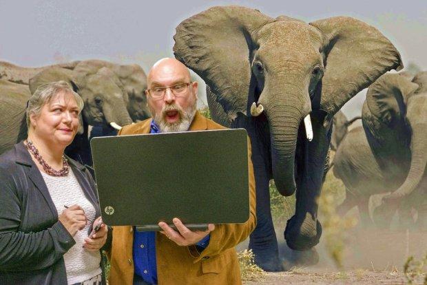1489803731446_Herding Elephants