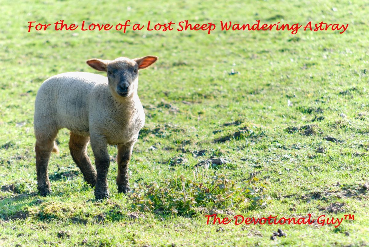 For the Love of a Lost Sheep Wandering Astray