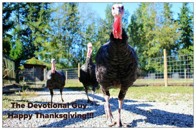 turkeys-1195431_1920