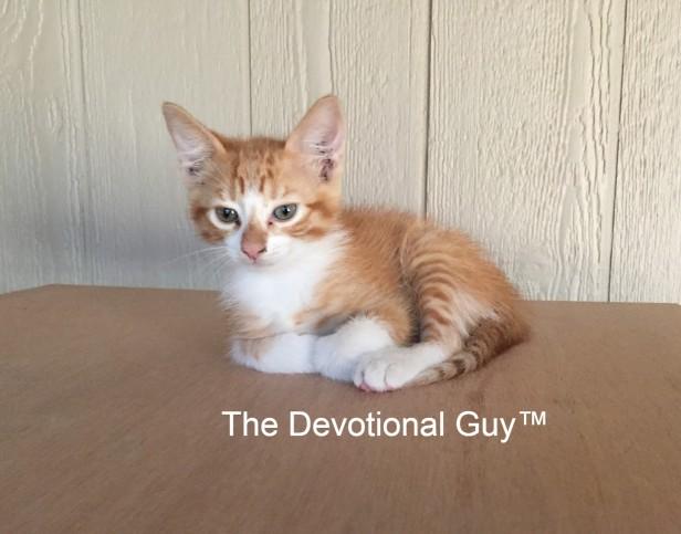 Little King of the World TDG